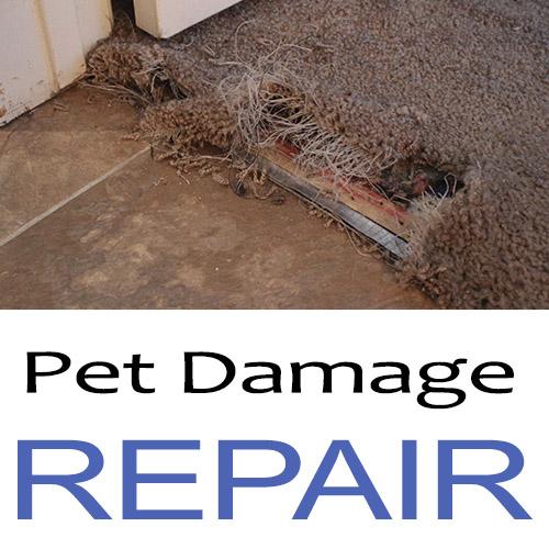 pet-carpet-damage-repair-san-diego