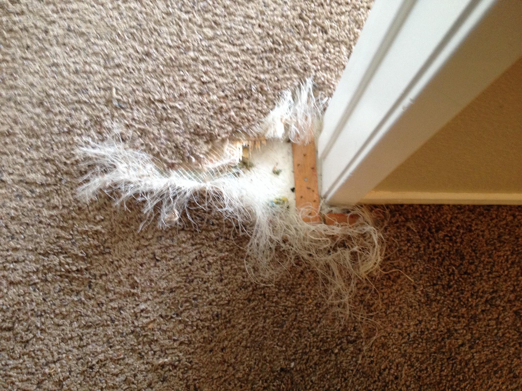 Pet Carpet Damage Repair San Diego San Diego Carpet