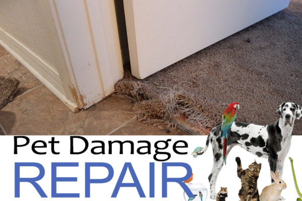 pet-carpet-damage-repair