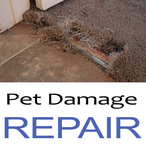 pet-carpet-damage-repair-san-diego